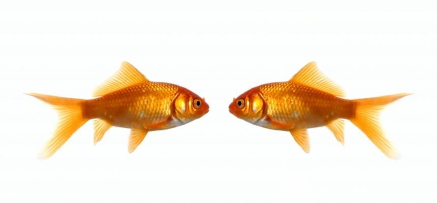 New Year Fish - Tag Strategies Blog