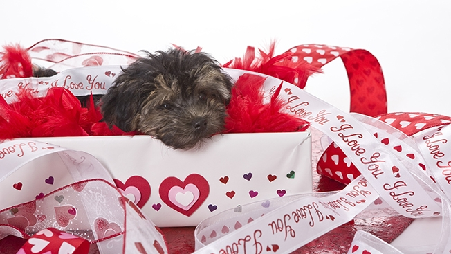 puppy-valentines-day-hed-2015- Tag Strategies Blog
