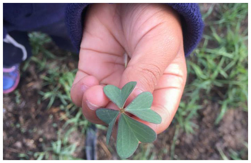 Four-leaf-clover - Tag Strategies Blog