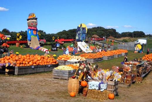 Linvilla-Pumpkinland - Tag Strategies Blog
